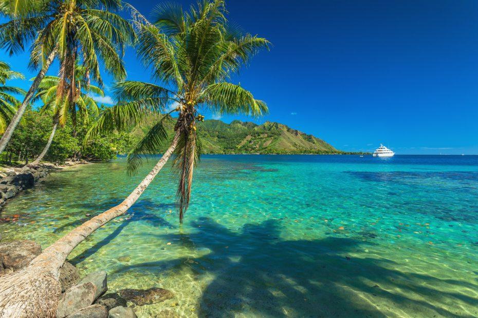 Palm Trees and quiet bay at Moorea in Tahiti